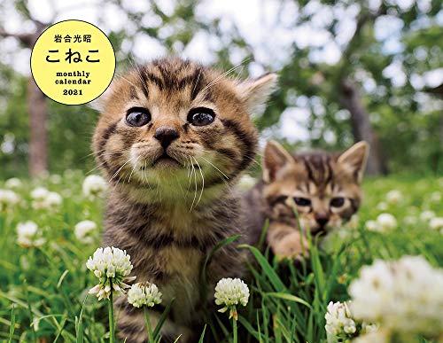 岩合光昭 こねこ monthly calendar 2021 ([カレンダー])の詳細を見る