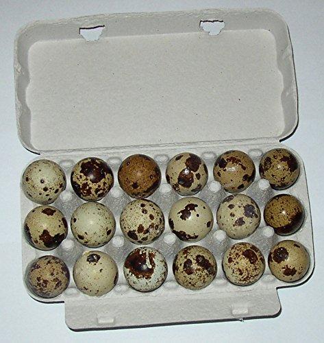 Wachteleier, je 50 (+4 gratis) Wachtel Eier direkt vom Erzeuger, tages-frische Delikatesse aus der Altmark