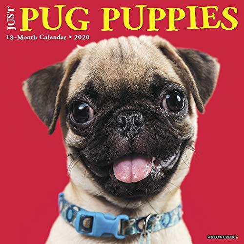 Just Pug Puppies 2020 Wall Calendar (Dog Breed Calendar)