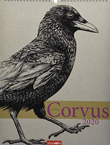 Corvus. Wandkalender 2020. Monatskalendarium. Spiralbindung. Format 30 x 39 cm