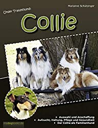 Traumhund: Collie