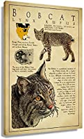 WQINGX Bobcat Knowledge Vintage Poster Canvas Art for Living Room Picture Decor for Wall Artwork Bedroom Decorations Rectangle Paintings for Bathroom Prints Photo Giclee Artwork Modern Home Office (16x24inch(40x60cm) Unframed)-12x18inch(30x45cm)_Unframed