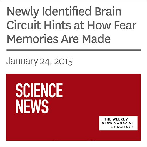Newly Identified Brain Circuit Hints at How Fear Memories Are Made audiobook cover art