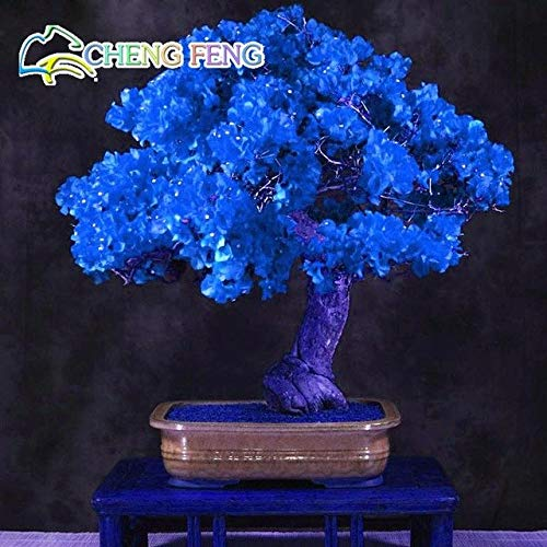 Shopmeeko 50 stücke Mix Farbe Bougainvillea Balkon Topf Hof Bonsai Blume Pflanze Immensly Auffällige Blühende Winterharte Kostenloser Versand Sementes: Hellgelb