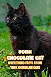 York Chocolate Cat: Interesting Facts About York Chocolate Cats: Interesting Facts About York Chocolate Cats (English Edition)