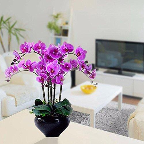 Rosepoem Phalaenopsis Samen, 20 Teile/Paket Stiefmütterchen Samen Schmetterling Samen Pflanzen Topf Orchideen Samen Pflanzen Bonsai Samen - Lila