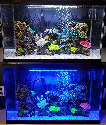 Éclairage d'aquarium LED bleu blanc effet lumineux 39 cm 21 LED Éclairage submersible effet de lumière multicolore, effets de lumière techniques Entrée 100-240 V 50/60 Hz Sortie : DC 12 V