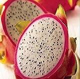 20 RARE Semillas Fruta del dragón de Pitaya Hylocereus undatus Frutas Semillas Semillas caliente SH