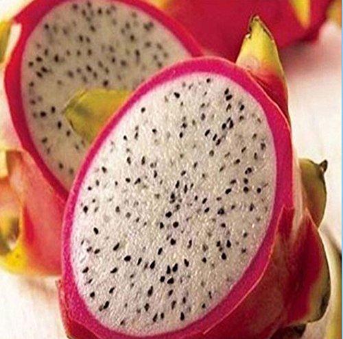 20 rare semences de fruits du Dragon Pitaya Hylocereus Undatus fruits semences graines chaud sH