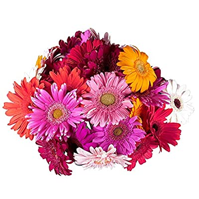 GlobalRose Gerbera Daisies 30 Stems of Assorted Color - Fresh Flowers for Delivery from Globalrose