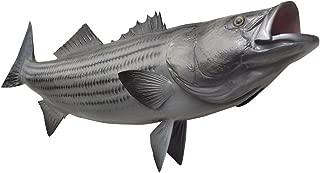 Mount This Fish Company 48