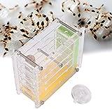 Sheens Nido de Hormigas Acrílico Hormiga Villa Hormiga Hormiga Granja Casa Pantalla de plástico Caja Cuadrada para la alimentación de Hormigas