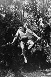 Gordon Scott Poster Tarzan im Dschungel, 60 x 91 cm