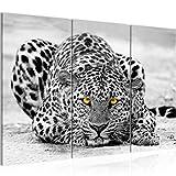 Runa Art Afrika Leopard Bild Wandbilder Wohnzimmer XXL Grau
