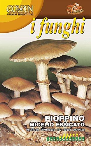 Franchi – Polystyrol-Musterraum – PIOPPINO – PHOLIOTA AEGERITA – 100 g