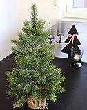 PARC Network - Plastik Weihnachtsbaum, im...