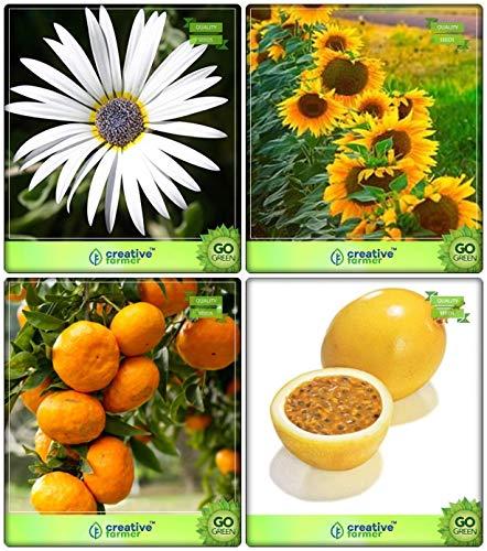 BloomGreen Co. Plantes Graines Combo fruits: Orange, Fruit de la passion - Jaune, Arctotis Grandis, tournesol géant Graines Nain de fleurs Fruits Graines de jardin