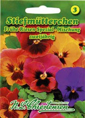 Stiefmütterchen Erfurter Frühe Riesen Spezial-Mischung Viola wittrockiana