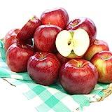 訳あり 減農薬 長野 生食用 紅玉 りんご 約4kg C品 小玉16~30個入産地直送