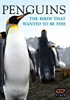 Wgbh Boston Specials: Penguins - Birds Who Wanted [DVD] [Import]