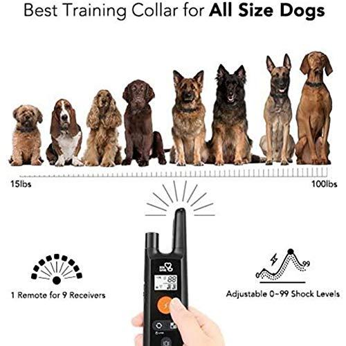 DOG CARE 1000ft Remote Training Collar