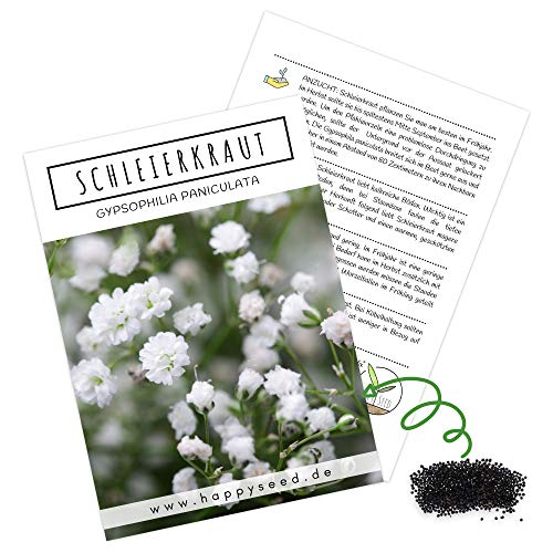 Schleierkraut Samen mehrjährig & winterhart (Gypsophilia paniculata) - Herrlich duftendes Blütenmeer & perfekt in Kombination mit Blumensträußen