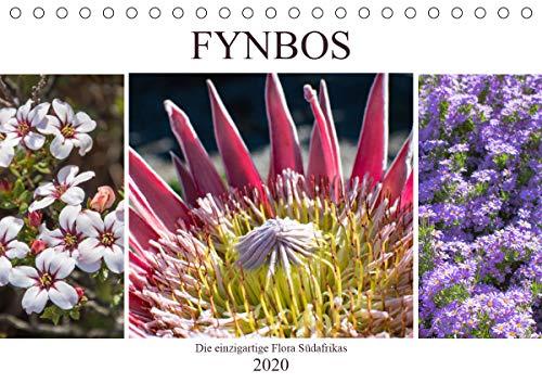 Fynbos - Die einzigartige Flora Südafrikas (Tischkalender 2020 DIN A5 quer)