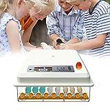 Bestine, incubatrice completamente automatica con 16 uova, incubatrice con indicatore di temperatura a LED, per uova di gallina, anatre, piccioni, uova di tacchino