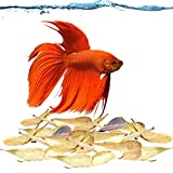 """SunGrow Miracle Fin Rot Leaves, Betta Medicine & Water Supplement, Keep Bettas Healthy and Happy, Contains Beneficial Compounds, 2"""" (5cm) Long Indian Almond Leaves, 50 Leaves"""