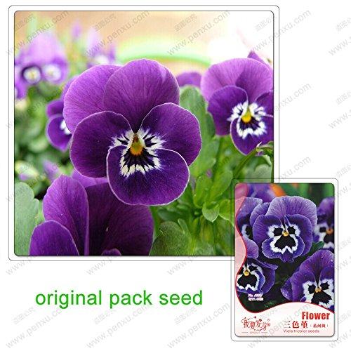 60 graines/Pack, Pansy, Pansy (entre locus coeruleus) graines, belle terrasse cour fleurie graines en pot