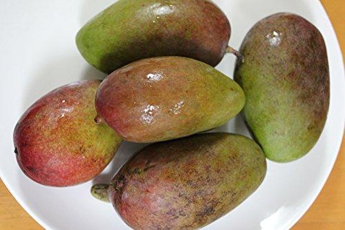 【予約開始】青切りマンゴー2kg【摘果マンゴー】マムアンディップ