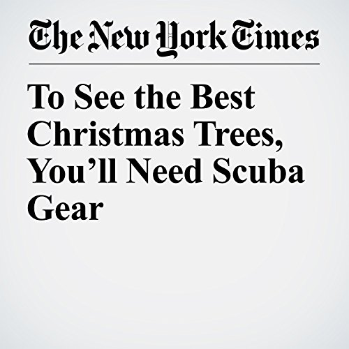 To See the Best Christmas Trees, You'll Need Scuba Gear copertina