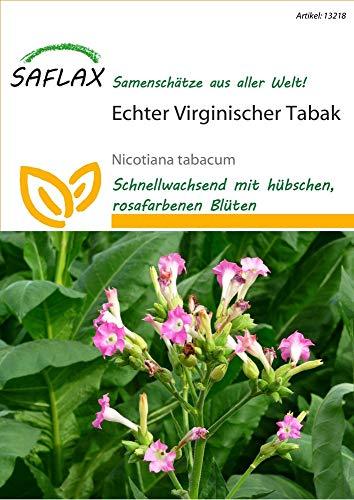 Saflax 13218 Echter Virginischer Tabak (Tabaksamen)