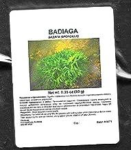 Badiaga/Spongilla Powder ?????? by PhytoLab