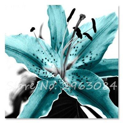 Livraison gratuite 100 pcs Lily Graines de fleurs Parfums Lily Graines Indoor Bonsai Graines exotiques vivace Plante en pot pour jardin 23