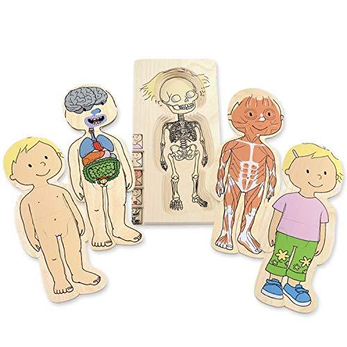Beleduc 17128 - Lagen-Puzzle Dein Körper Mädchen