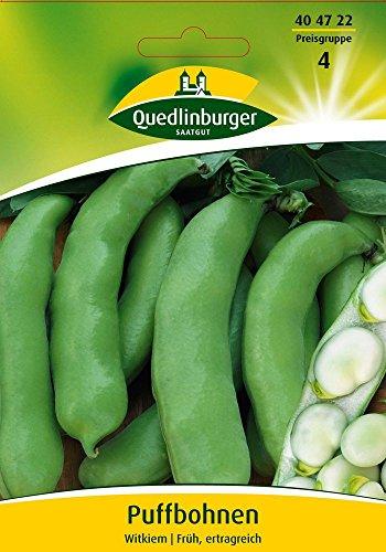 Puffbohne Witkiem (weißkeimige) von Quedlinburger Saatgut