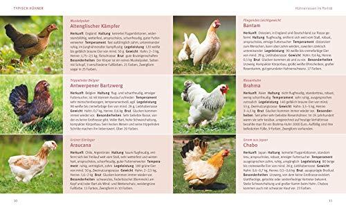 Hühner halten: Das Rundum-Sorglos-Paket (GU Tierratgeber) - 4