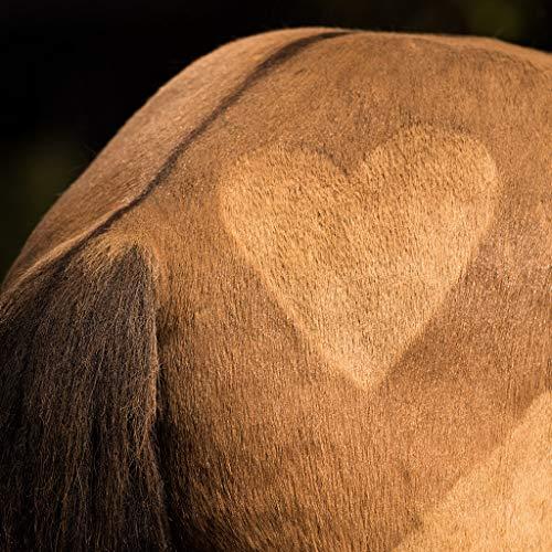Ida Plus - Reines Bierhefe-Pulver - 3 kg - 100% Naturprodukt für Hunde, Katzen & Pferde - Futterergänzung für glänzendes Fell & kräftige Haut - reich an B-Vitaminen, Mineralien & Spurenelemente - 4