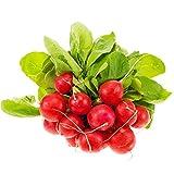 Semillas de hortalizas de cuatro estaciones, lechuga, semillas de repollo pequeñas, verduras rápidas de cuatro estaciones, plumas de pollo, macarrones 300 piezas