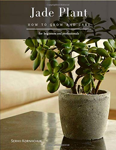 Jade Plant: How to grow and care