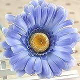 B/H Semillas de Flores perennes,Semillas de Flores de Gerbera florecientes Resistentes para la decoración del balcón del jardín-W2_50pcs,Maceta para Plantas de jardín/Interiores