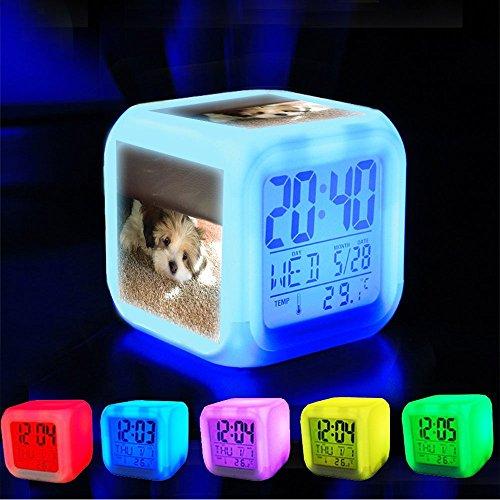 Alarm klok 7 LED kleur veranderen wakker slaapkamer met data en temperatuur display (veranderbare kleur) Pas het patroon-033.Bella, onze 12 week oude Shih Tzu puppy, het spelen van verstoppertje en zoeken