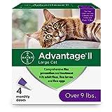 Advantage II 4-Dose Large Cat Flea Prevention, Flea Prevention for Large Cats, 9 Pounds and Over