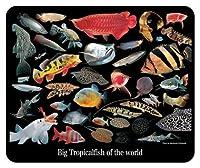 大型熱帯魚のマウスパッド 2:フォトパッド*( 世界の熱帯魚シリーズ )