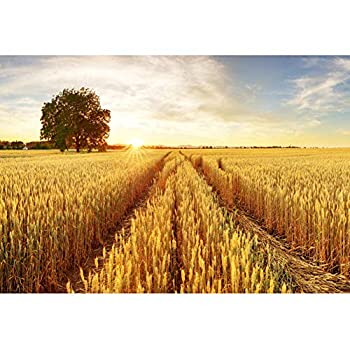 Best wheat field background Reviews