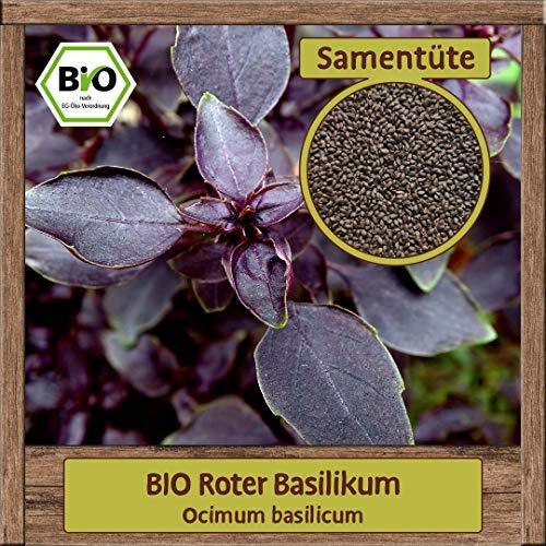 Samenliebe BIO Kräuter Samen Basilikum Roter (Ocimum basilicum)   BIO Basilikumsamen Kräutersamen   BIO Saatgut für ca. 2 m²