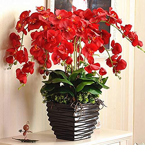 Roter Schmetterling Orchideensamen 20 Stück (Phalaenopsis aphrodite) Bio-Motte Orchideenblüte Frische Premium-Samen zum Pflanzen von Garten-Innenhöfen