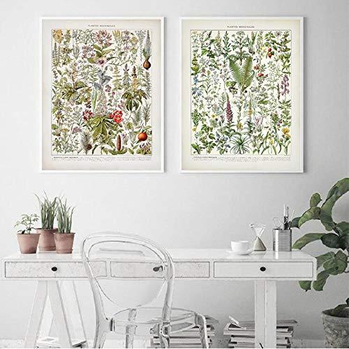 Botanische geneeskrachtige planten, affiches en printen, vintage, klaproof, hysope, lavendel, afbeelding op linnen, wanddecoratie, 50 x 70 cm x 2 zonder lijst