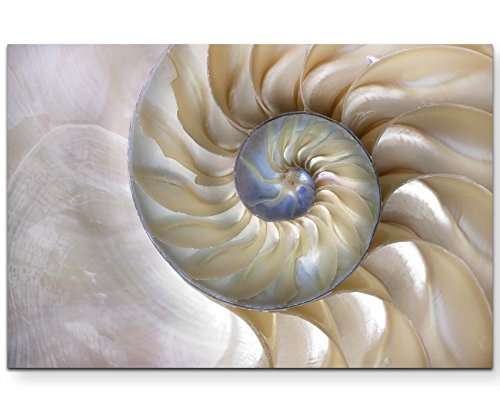 Paul Sinus Art Leinwandbilder | Bilder Leinwand 120x80cm wunderschöne Nautilus-Muschel – Nahaufnahme